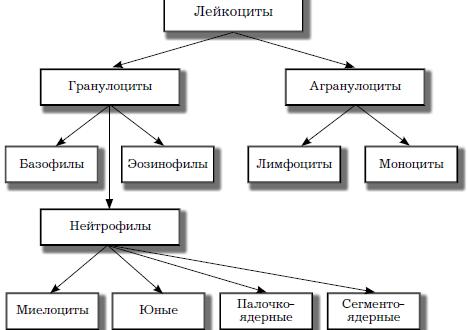 Hematolojik Çalışmalar Türleri