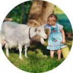Козье молоко: состав, целебные свойства, противопоказания