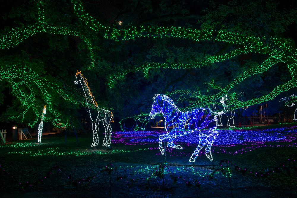 Zoo Lights Schedule