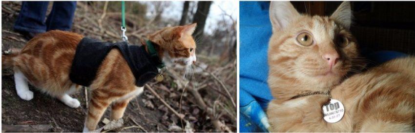 bir kedi bulduktan sonra ne yapmalı